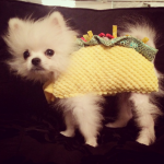 PARIS HILTON'S DOG, PRINCE As a taco. (Photo: INSTAGRAM)