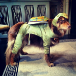 AMANDA SEYFRIED'S DOG, FINN As a turtle. (Photo: INSTAGRAM)