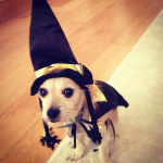 CHLOE MORETZ'S DOG, JAXON As a witch. (Photo: INSTAGRAM)