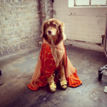 AMANDA SEYFRIED'S DOG, FINN As a king. (Photo: INSTAGRAM)