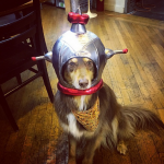 AMANDA SEYFRIED'S DOG, FINN As an astronaut. (Photo: INSTAGRAM)
