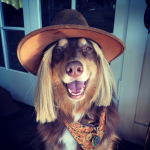 AMANDA SEYFRIED'S DOG, FINN As a cowboy. (Photo: INSTAGRAM)
