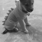 ARIANA GRANDE'S DOG, FAWKES As a dinosaur. (Photo: INSTAGRAM)