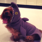 KARLIE KLOSS' DOG As a shark. (Photo: INSTAGRAM)