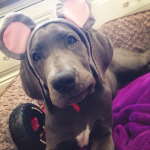 KENDALL JENNER'S DOG, BLU As a mouse. (Photo: INSTAGRAM)