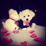 DEMI LOVATO'S DOG, BUDDY As the Bachelor. (R.I.P.) (Photo: INSTAGRAM)