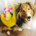 MILEY CYRUS' DOG, EMU As a banana split. (Photo: INSTAGRAM)