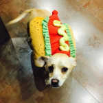 MILEY CYRUS' DOG, BEAN As a hot dog. (Photo: INSTAGRAM)