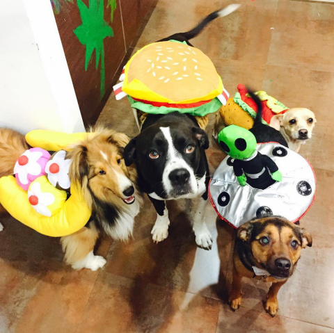 MILEY CYRUS' PET SQUAD As a banana split, hamburger, hot dog, and UFO. (Photo: INSTAGRAM)