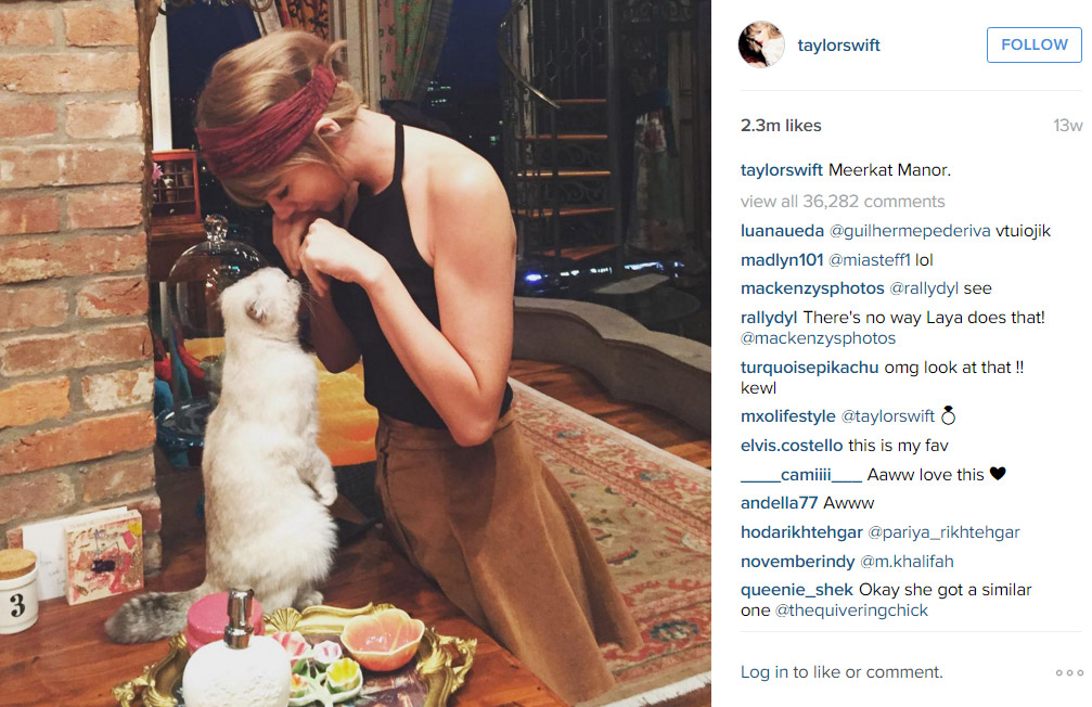8. Taylor Swift and her cat again (Photo: Instagram)