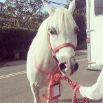 Lady Gaga has stolen the dream of just about every little girl by actually getting a pony for Christmas. What's next, marrying Justin Bieber? (Photos: Instagram, @ladygaga)