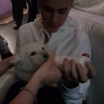 Bieber controversially previously owned a pet monkey named Mally. (Photo: Instagram, @alexhaditaghi)