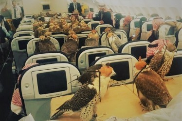 Birds On A Plane: This Viral Photo Of Falcons Is Cracking Up The Net