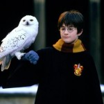 Rowling killed off Hedwig because it represented the loss of innocence and security, and her death marked the end of Harry's childhood. (Photo: Archive)