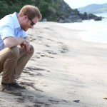 Harry releasing baby turtles into the sea. (Photo: Archive)