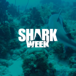 7 p.m. Shark Week (Discovery; programs all week) (Photo Archive)