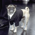 Mushu, the dog who played Frank the Puck in the first movie, was used again in Men in Black II, but, since the pug was now seven years old, the crew had to use makeup to cover the gray hair growing around its nose. (Photo: Archive)