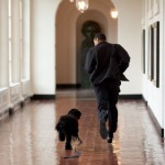 President Obama runs down the East Colonnade alongside Bo, the family dog. (Photo: Archive)