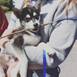 """""""Meet the newest addition to the krew,"""" Sophie captioned the picture of her new puppy. (Photo: Instagram)"""