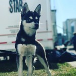 In September, the GOT star and the DNCE singer adopted a Siberian husky puppy named Porky Basquiat. (Photo: Instagram)
