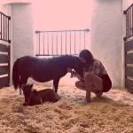 "Last year, Bella Hadid shared a photo of the family's ""tiny new additions:"" two cute little ponies. (Photo: Instagram)"