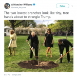Do it, tree! Do it! (Photo: Twitter)