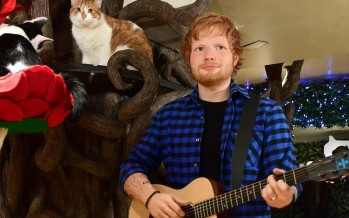 Don't Be Fooled—This Isn't The Real Ed Sheeran, It's Just His Freakishly Spot-On Wax Figure