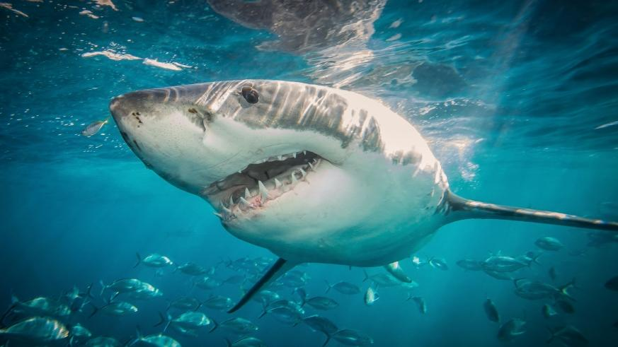 In honor out TV's greatest nature marathons, here are a few tweets that will only make you more excited about Shark Week. (Photo: Release)