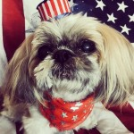 Kerry Washington's doggie was feeling very festive. Luckily, she was there to capture his very patriotic outfit. (Photo: Instagram)