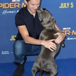 "Tom Holland brought a special date to the London premiere of his movie ""Spider-Man: Homecoming"": his adorable dog Tess! (Photo: WENN)"