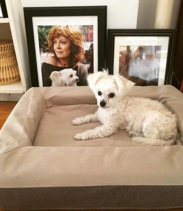 Because Susan has the cutest dogs, Penny Lane and Rigby Sue (we know—those are really cool names) and she often poses picture of them. Instagram dogs doesn't better than Susan Sarandon's! (Photo: Instagram)