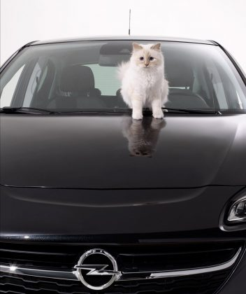 Choupette has a successful modeling career, earning millions for a single shoot. In 2015, she collaborated with the brand Shu Uemura and posed for a Xuxhall Corsa car calendar, earning two million euros in total! (Photo: Instagram)
