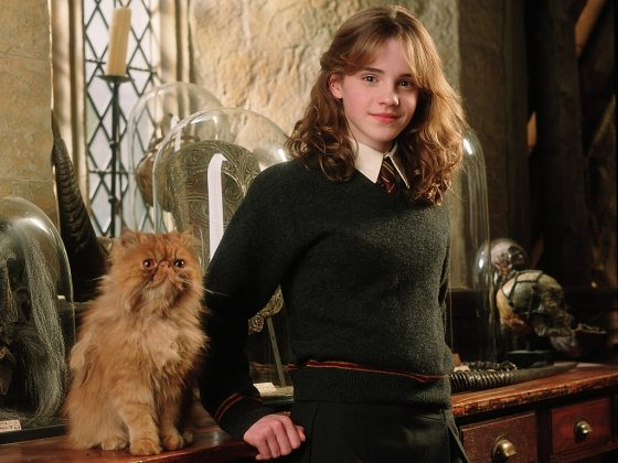 She's a cat person. And, like my daddy always told me, never trust someone who doesn't like dogs. And why was she casual about letting Crookshanks roam around while Scabbers was in the same room? (Photo: Release)