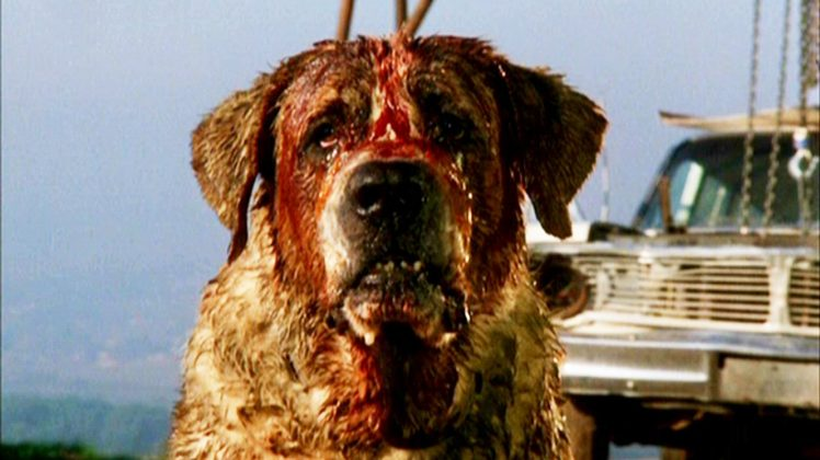 """Cujo"" is a simple shocker about a woman trapped in a car with her son by a deadly and rabid St. Bernard. The film somehow managed to keep the single location exciting. (Photo: Release)"
