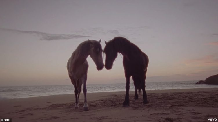 The video is set at a tropical beach, where horses roam across the sand as a symbol for the couple's love (Photo: Release)