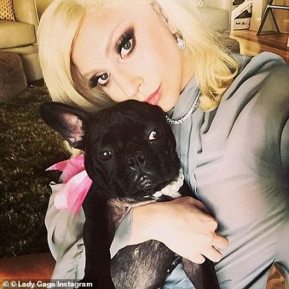 Two of Gaga's dogs, Koji and Gustav, were stolen while her third bulldog, Miss Asia, avoided capture and returned to be by Ryan's side after he was shot (Photo: Instagram)