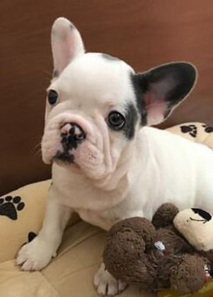 The dogs, Gustav and Koji, were returned to the pop star by a mystery woman who said she found them tied to a post in Los Angeles on Friday. (Photo: Instagram)